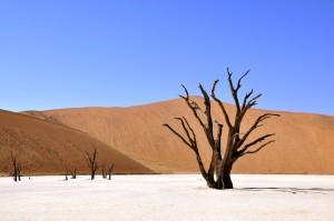 albero sterile